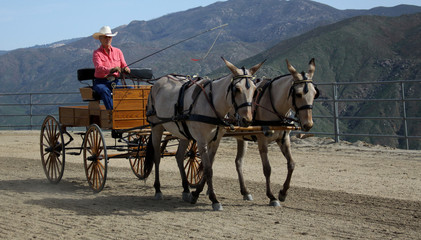 Driving the Mules