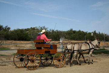The Carriage Ride - Working with the Mules