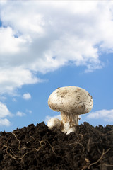 Champignon on Sky Background