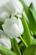 Fototapete Fallen lassen - Tautropfen - Blume