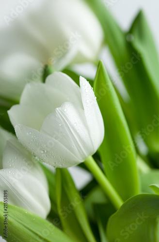 wiazanka-bialych-tulipanow