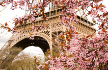 "Постер, картина, фотообои ""Spring in Paris. Bloomy cherry tree and the Eiffel Tower"""
