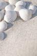 Muscheln, Sandstrand, Sommerfeeling