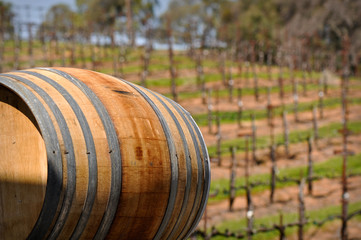 Wine Barrel in Napa Vineyard