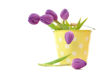 Wet Purple Tulips
