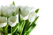 Fototapete Tautropfen - Wassertropfen - Blume