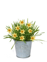 Background of yellow flower and flower-pot
