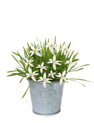 Background of white flower and flower-pot