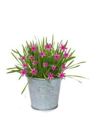 Background of pink flower and flower-pot