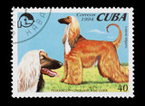 Cuban mail stamp featuring two Afghan hounds poster