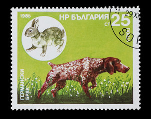 Bulgarian stamp featuring a Pointer hunting dog and game