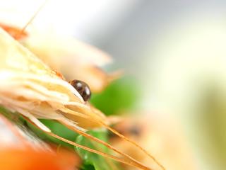 Macro shot of prawn