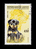 Guinean mail stamp featuring a pedigree Rottweiler puppy poster