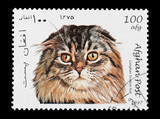 Afghan mail stamp featuring a Scottish Longhair Fold cat poster