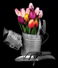 two tone garden tools and Tulips