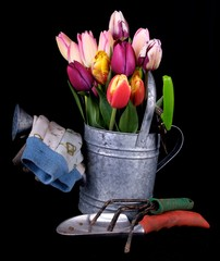 Garden tools and tulips