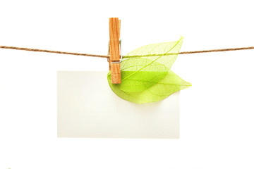 White card with green leaves and clothes peg isolated. Series