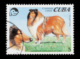 Cuban stamp featuring a pedigree Rough Collie dog poster