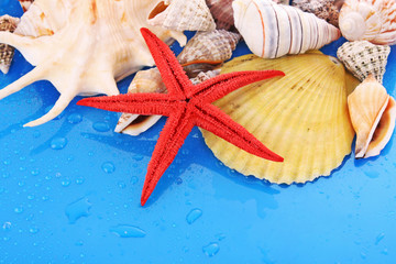 Shells on blue background with water drops