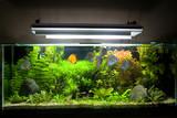 Tropical Freshwater Aquarium with Discus Fish 1