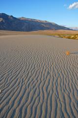 Rippled Desert