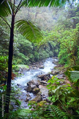 Jungle river - 21634812