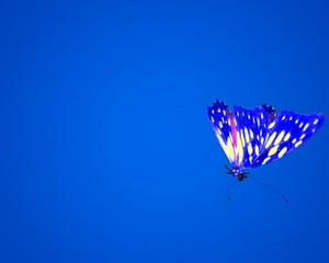 Butterfly fly on-camera PAL