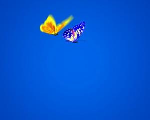 Flight of two butterflies PAL