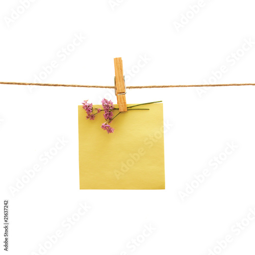 reminder and flower with clothes peg over white. Series