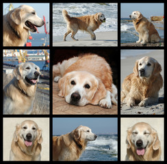 One day from golden retriever's life - collage