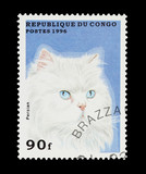 Congo stamp featuring a white pedigree persian cat poster