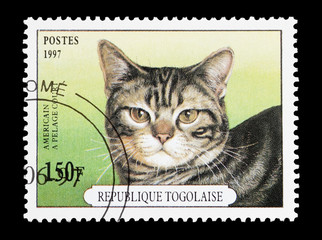 Togo mail stamp featuring an american shorthair cat