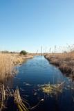 Florida Wetlands Scenic poster