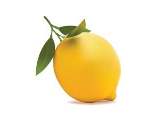 lemon on a white background