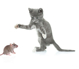 Cat catching a mouse isolated against white background