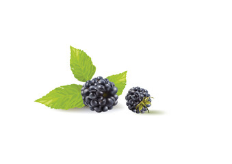 blackberries and leaves on a white background