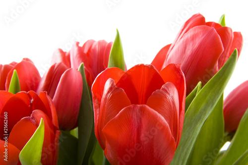 czerwone-tulipany-holenderski