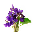bouquet of violets isolated on white background