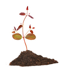 Tree sprout in soil