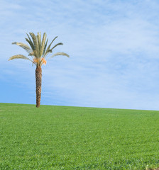 Palm tree on field