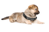 laying puppy isolated over white background