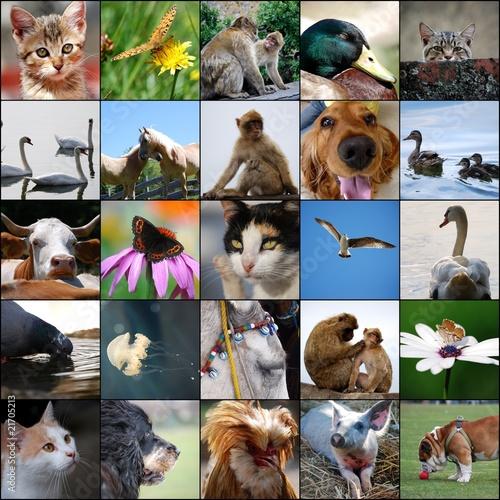 Poster animali