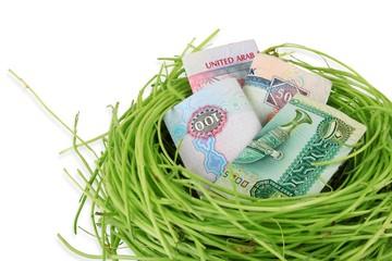 UAE money dirhams in a nest