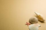 Fototapete Sammlung - Exotisch - Muscheltiere