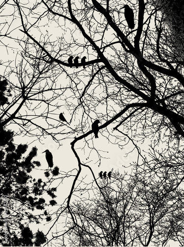 In de dag Vogels op boom tree