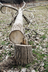 sawed tree. cause the detriment of nature