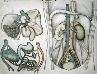 Vintage medical illustration from late 1800