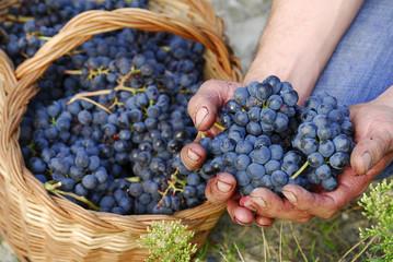 Mira mis uvas.