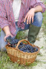 Manos con uvas y cesta.