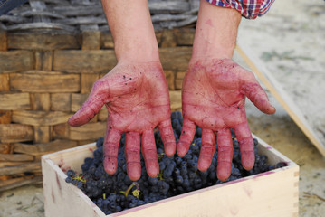 Manchadas de uva.